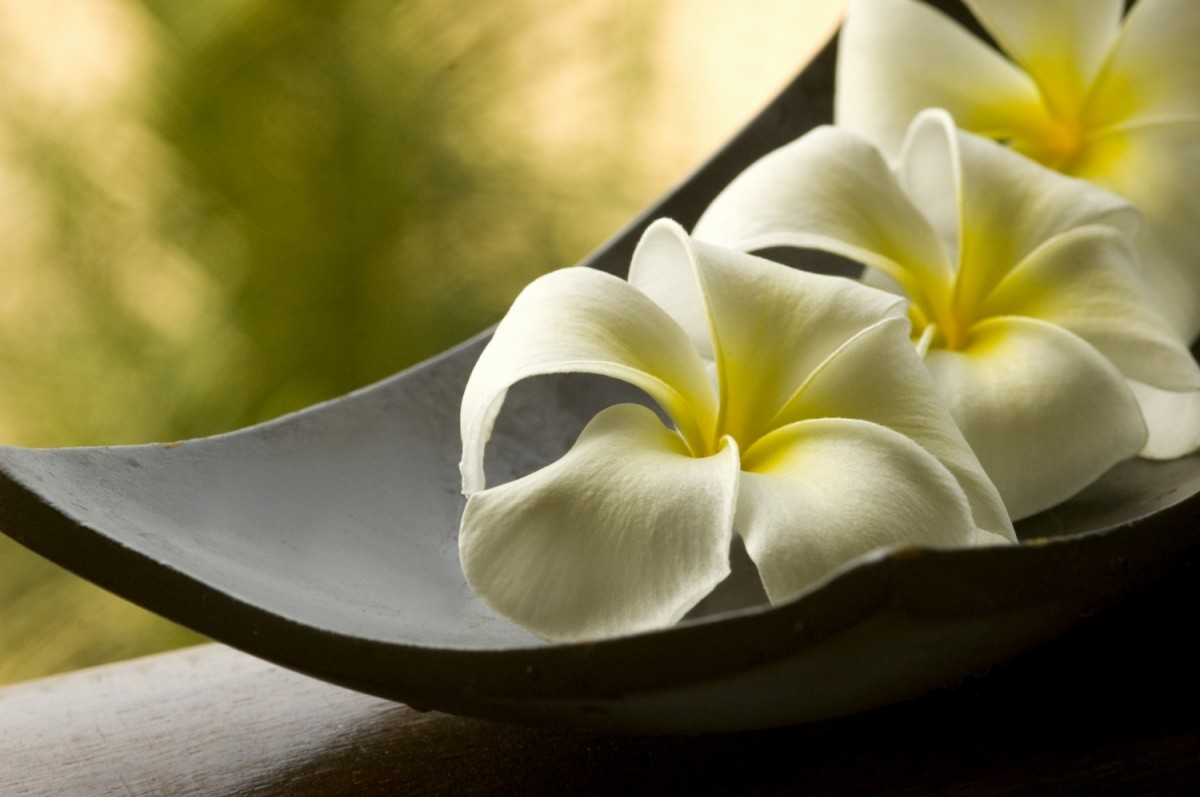hanging gardens of bali spa collection best